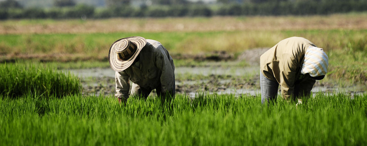 Stock image depicting International Agricultural Development